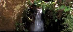 Una forma Sostenible de producir café y cosechar agua