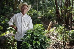Portrait of Cándido Gómez Argueta, 74, a coffee farmer from Cantón Pueblo Viejo Arambala, Morazán, in oriental El Salvador. He has begun renewing his coffee plantations with new leaf rust resistant varieties and is doing new agricultural practices to conserve moisture in the ground. Climate Change and El Niño Phenomenon has given scarce rains in the area. CRS with its partner ACUGOLFO is teaching local producer like Cándido good agricultural practices to survive the drought.