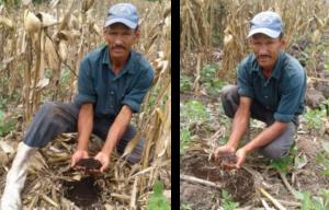 Imagen 5 – El agricultor evalúa la diferencia de humedad en su experimento con tres tratamientos de cobertura (0 cobertura, 2 ton de cobertura/ha y 4 ton de cobertura/ha) en una rotación de maíz-frijol durante el ciclo de postrera 2016. Jinotega, Nicaragua.