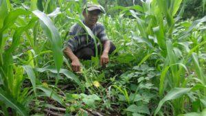 La experiencia de las ECA en Nicaragua8.jpg.png