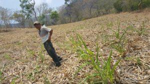 La agricultura de conservación produce resultados en Nicaragua